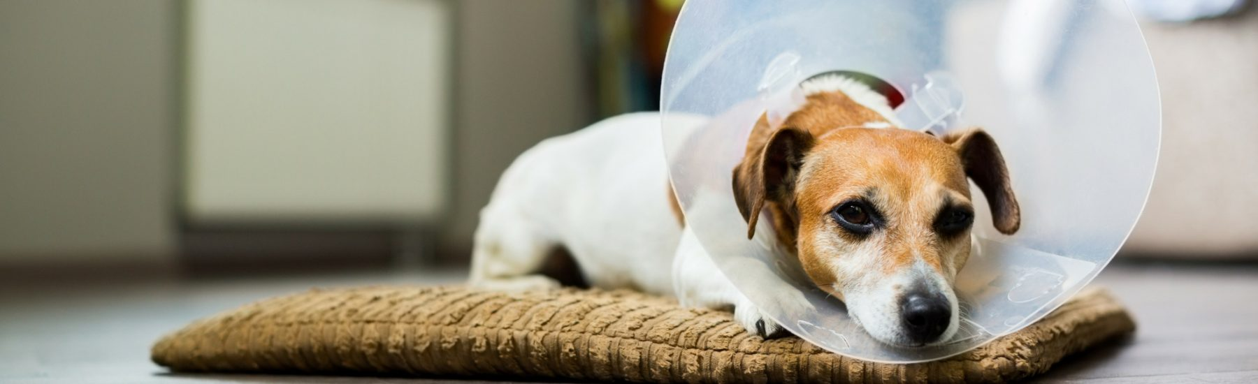 dog_surgery