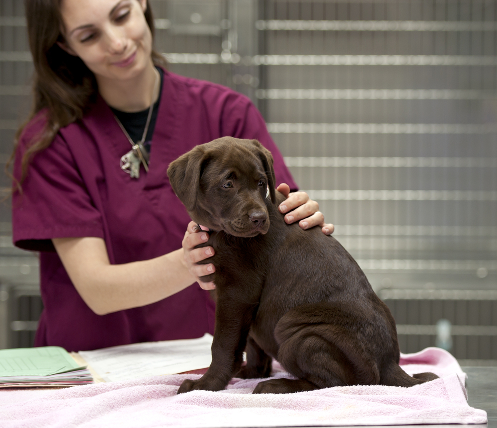 The Real Heroes of the Veterinary Team: A Day in the Life of